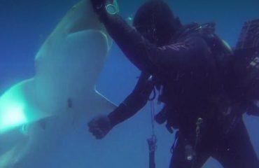 Florida, peshkaqeni ka grepin në bark, zhytësi e shpëton (Video)