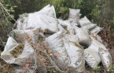 Berat, kapen 1.5 tonë kanabis; 6 persona të shoqëruar në polici