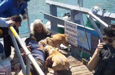 Pronari-hero shpëton qenin nga sulmi i tmerrshëm (Video)