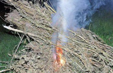 Shkodër, agjesohen tre parcela me fidanë kanabisi dhe 300 bimë të thara