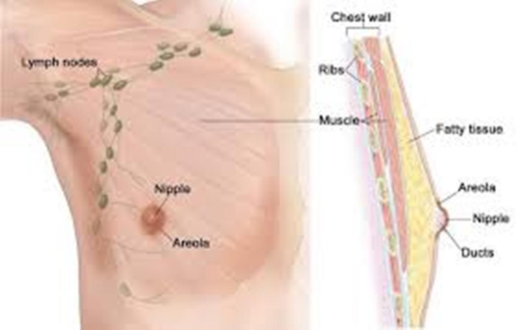 Studimi/ Edhe burrat mund të preken nga kanceri i gjirit