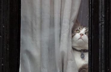 Kjo mace i përket një njeriu të famshëm, fotoja po bën xhiron e botës