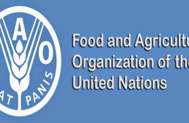FAO urges authorities in Albania to vaccinate cattle
