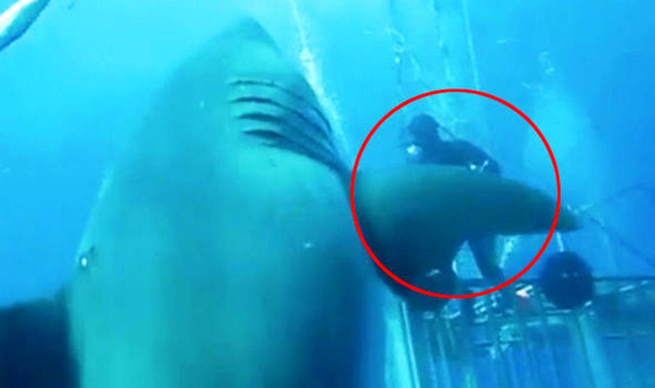 VIDEO / Peshkaqeni më i madh në botë, kapet nga kamera e zhytësve në kafaz