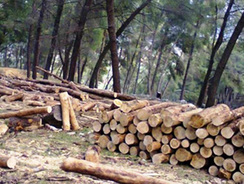 Shkuan të kontrollonin prerjen e drurëve, keqbërësit i presin me plumba inspektorët e pyjeve në Bulqizë