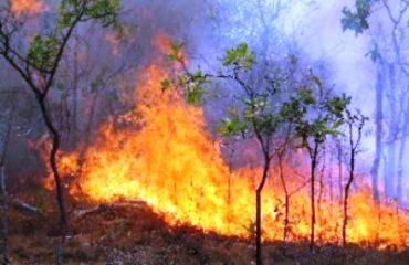 EC: 10 vatra zjarri në vend, shkrumbohen sipërfaqe me ullinj e pisha
