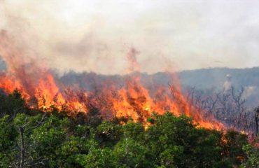 Vatra zjarri në Bulqizë dhe Përrenjas, shkrumbohen dhjetëra hektarë me pyje