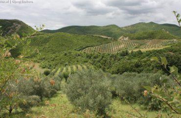 Shqiptarët tani po mbjellin vetëm  perime edhe ullinj, jo më drithëra