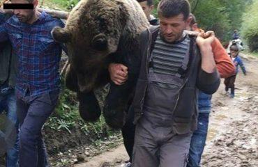 """""""ANTENA JASHTË FAMILJES"""", Flet ariu i vrarë në Kala të Dodës: Ja përse ju haja misrin...!"""