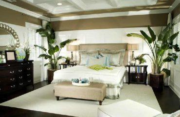 A janë të dëmshme bimët në dhomën e gjumit?