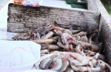 Video / Peshkatarët e SHBA kërkojnë ndihmën e Trump
