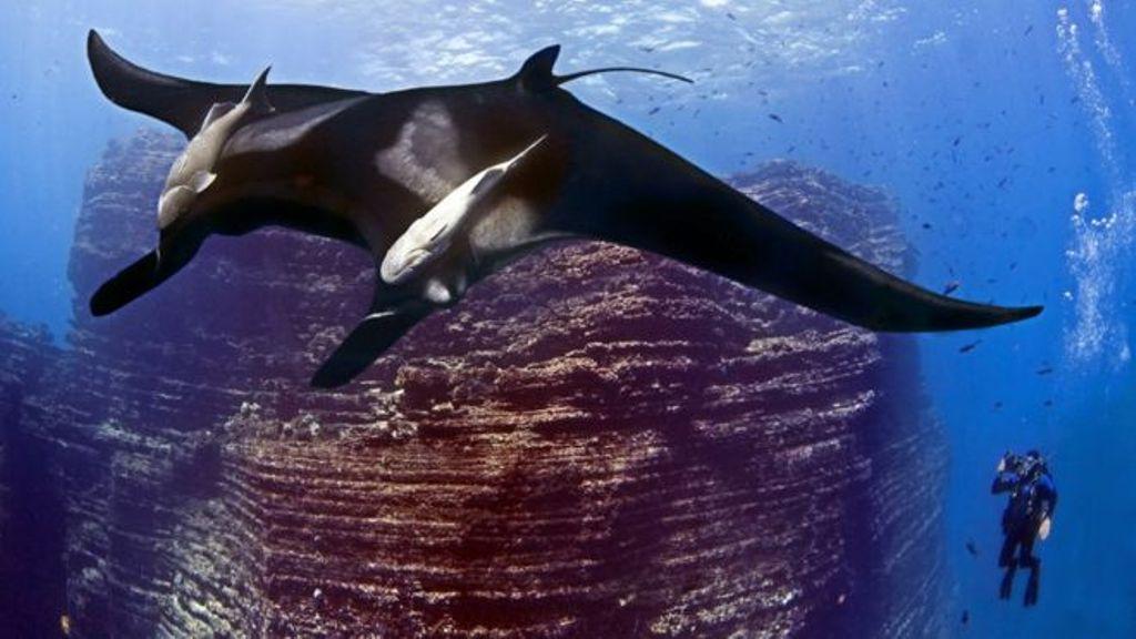 Meksika mbron kafshët oqeanike, krijohet parku më i madh i Amerikës së Veriut