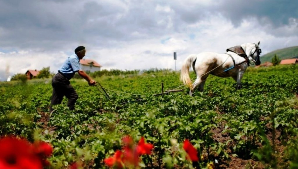 What sectors do Albanians prefer to work in? Fewer people opting for farming jobs