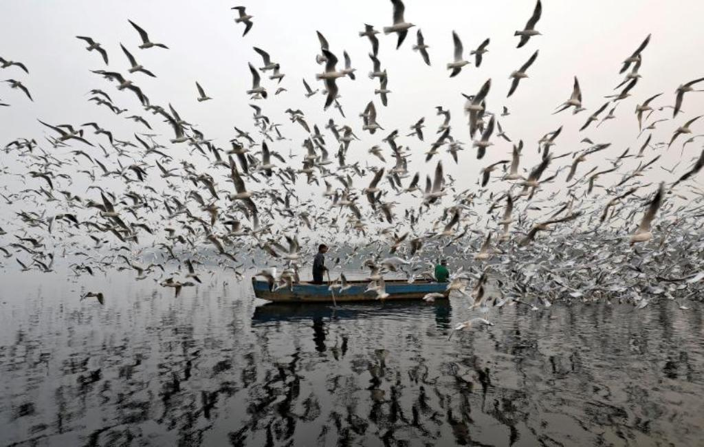 Mëngjes me smog në këtë qytet, po çfarë bëjnë këta peshkatarë me pulëbardhat?