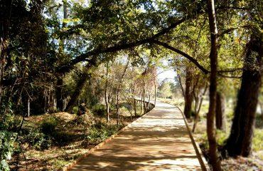 Parku i bukur Kombëtar i Divjakës (Foto)