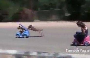 Fëmija apo qeni, kush e fiton garën me makina? (VIDEO)