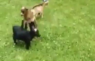 """Ky kec është një akrobat i vërtetë, shikoni çfarë bën me """"shokët"""" (Video)"""