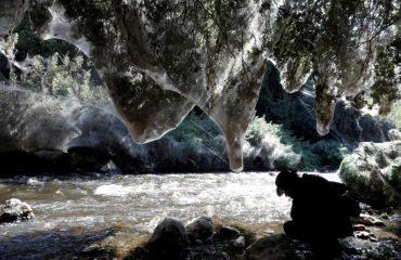 Merimangat gjigante mbulojnë pemët, pamje e rrallë në Jeruzalem