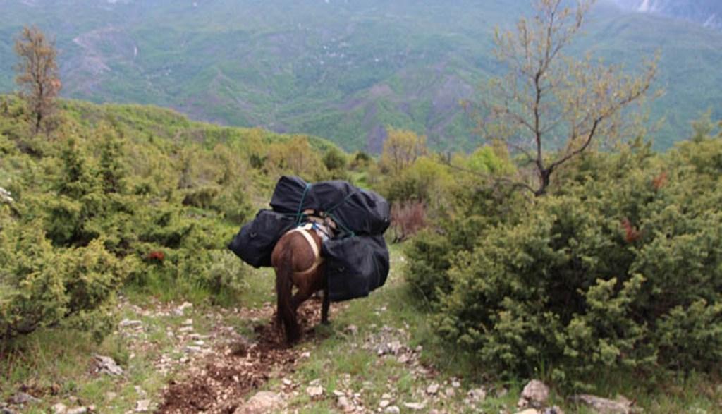 Marijuanë me mushkë në Mal të Zi, trafikanti shpëton duke hyrë brenda kufirit shqiptar