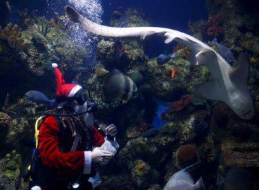 Edhe peshqit duan ushqim ndryshe për Krishtlindje, shikoni çfarë ndodh në këtë rezervuar