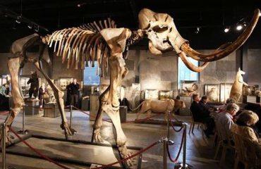 Skeleti i mamuthit 15 mijë vjeçar del në ankand, 500 mijë dollarë për ta patur në shtëpi (VIDEO)
