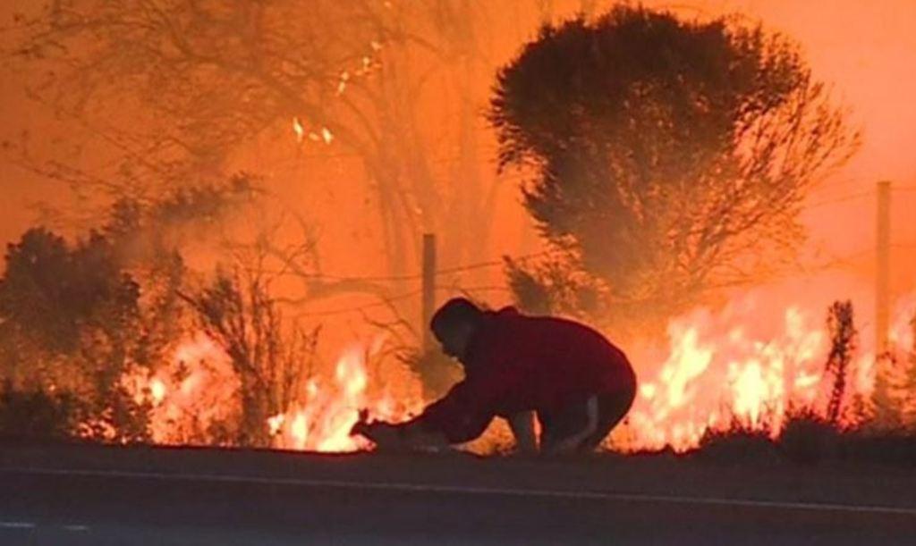 Zjarret po përvëlojnë Kaliforninë, ky njeri kujdeset të shpëtojë lepurin (VIDEO)