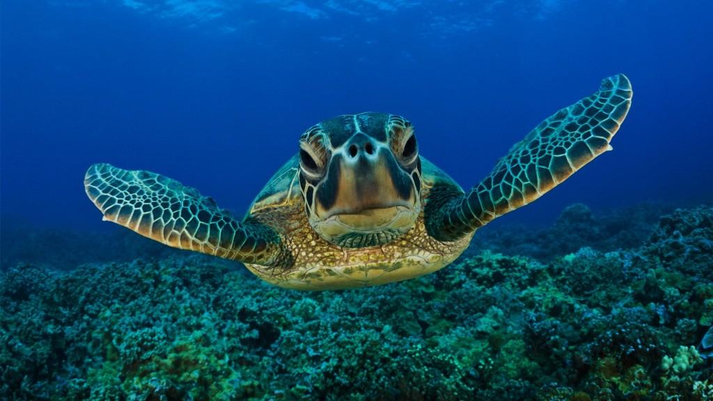 """Pamje e rrallë nga fundi i oqeanit, breshka e ujit nuk e """"prish terezinë"""" nga zhytësit (VIDEO)"""