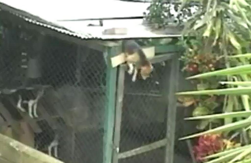 Inteligjiencë e mahnitshme, shikoni çfarë bën ky qen për të fituar lirinë (VIDEO)