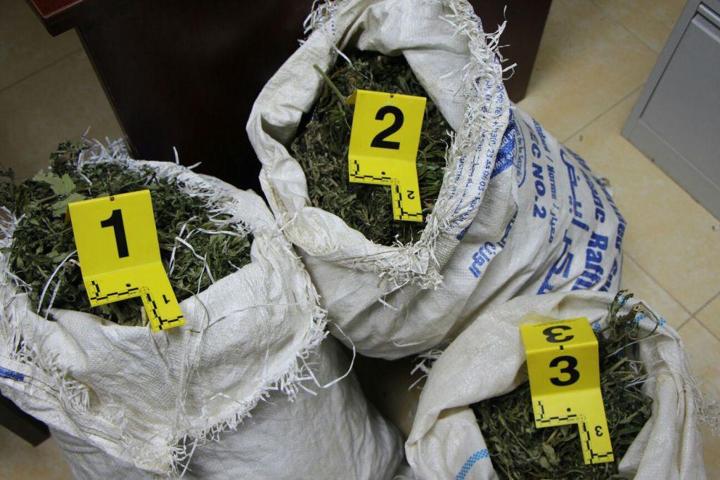 Shtatë kuintalë kanabis në pyjet e Skraparit, policia u informua për drogën e fshehur