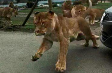 Luanët sulmojnë makinën, momente tmerri për dy gra dhe dy fëmijë brenda automjetit (VIDEO)