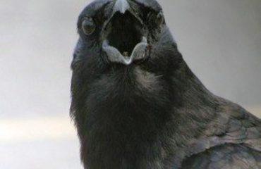 Astrit Patozi: Edi Rama kishte të drejtë për zogjtë e korbit...