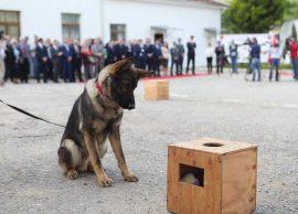 200 qentë e policisë, 50 milionë lekë në vitkosto