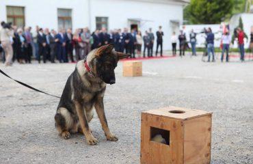 200 qentë e policisë, 50 milionë lekë në vitkostoja për ushqim