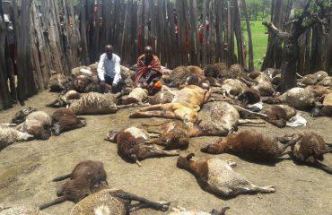Fshatarët ekzekutojnë luaneshën, kishte mbytur mbi 100 dele