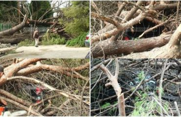 Era shkul e thyen pemën që zë poshtë automjetet