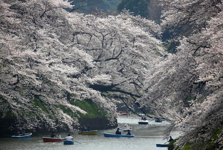 Pranverë në Tokio, shikoni çfarë bëjnë njerëzit në park