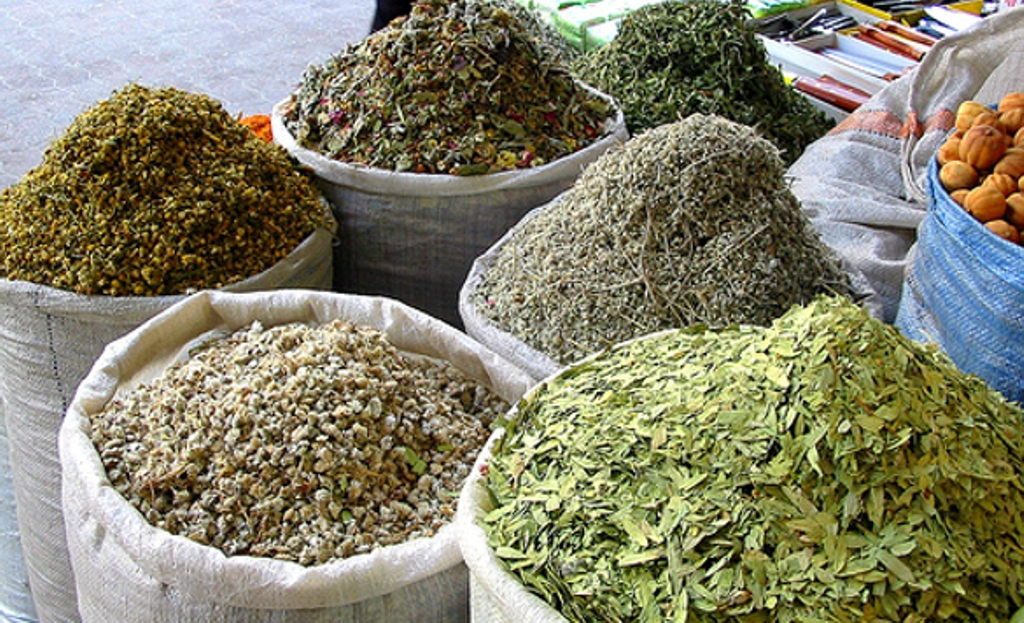 Government encourages the cultivation of medicinal herbs to deter the cultivation of cannabis