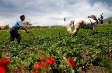 Interesi për bujqësinë sa vjen edhe po bie... Ku punojnë shqiptarët?