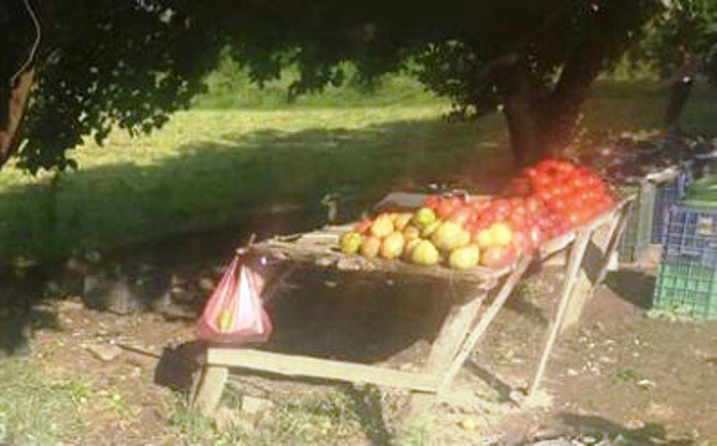 Makina përplas për vdekje shitësin ambulant të fruta - perimeve në Elbasan