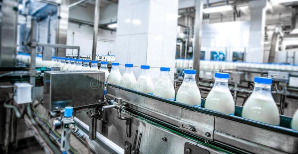 Po forcohet industria e qumështit, në rritje sasia e grumbulluar nga fermerët