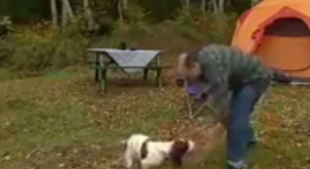 VIDEO – HUMOR/ Tallet me qenin, por përfundon duke bërë punën e qenit