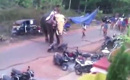 Kujdes nga elefanti i inatosur, shikoni çfarë mund të bëjë (Video)