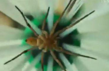 VIDEO/ Ambientalistët shpikin pajisjen që kap merimanga për të shpëtuar insektet, shikoni si funksionon