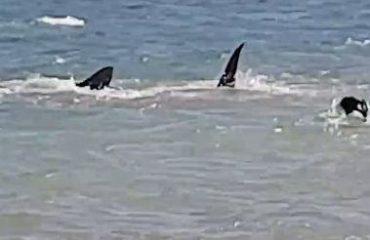 Qeni përleshet me peshkaqenin në det, video e pabesueshme
