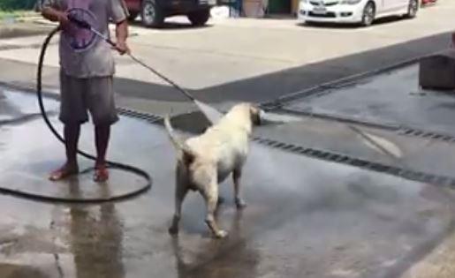 VIDEO/ Ku ta lajmë qenin? Shikoni një zgjidhje origjinale kur përton ta bësh vetë