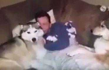 VIDEO/ Xhelozia e qenve, shikoni si 'luftojnë' me njëri-tjetrin për të fituar dashurinë e të zotit