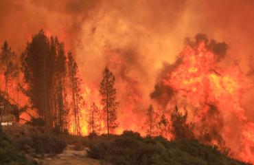 """Zjarri shkrumbon 7 hektarë pyje në Tropojë, era """"është me flakët"""""""
