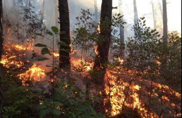 Zjarr në Gramsh, shkrumbohet masivi pyjor me shkurre