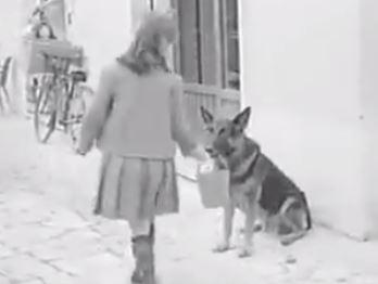 VIDEO/ Edhe qeni ta prish mendjen kur lyp me edukatë për të blerë mish. Si të mos i japësh?