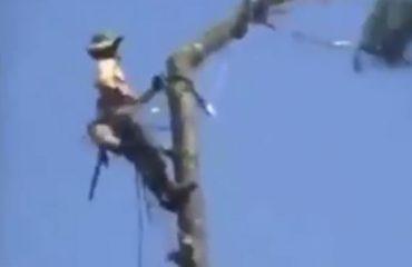 VIDEO/ Të presësh pemë duket punë e lehtë, por janë ca gabime që nuk duhet t'i bëni